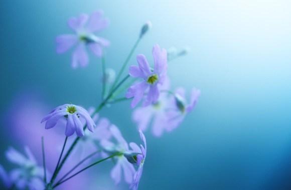 Beautiful Delicate Violet Flowers HD Wallpaper