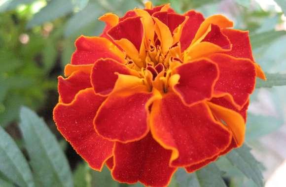 Orange Petal Flower HD Wallpaper