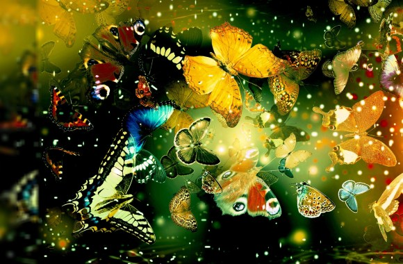 Butterfly World HD Wallpaper