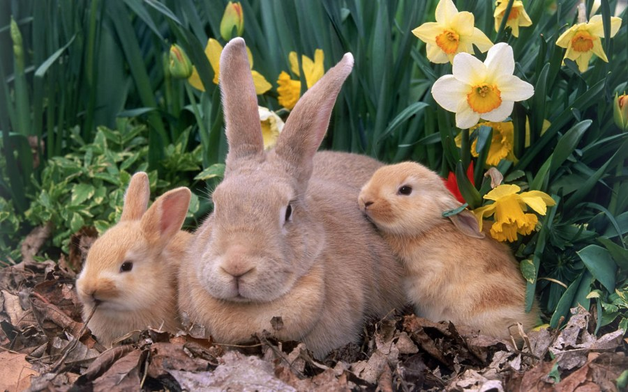Mother Rabbit and Babies