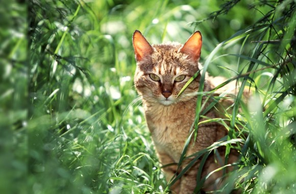 Cat in the Grass HD Wallpaper