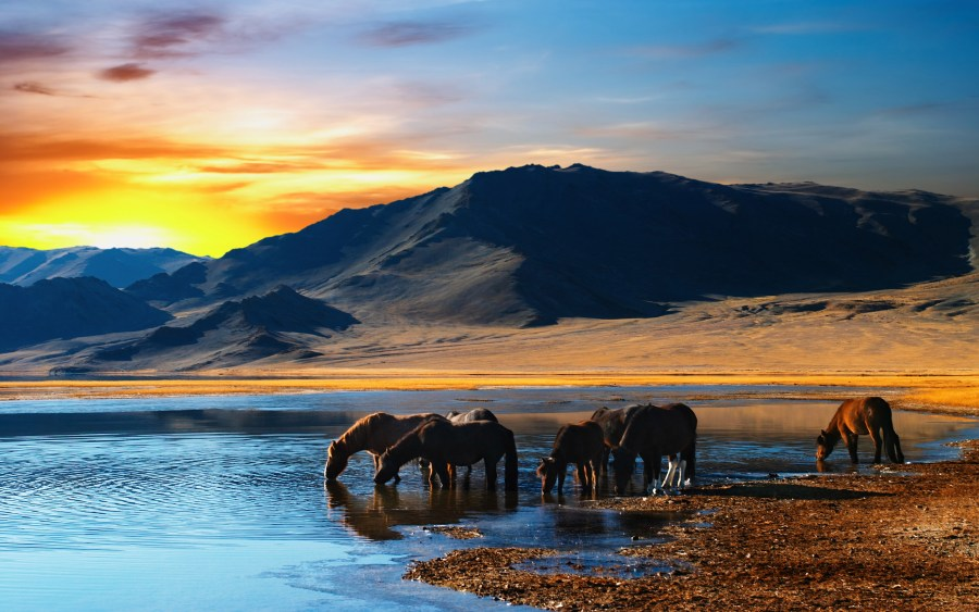 Photo of Horses in Lake at Sunset HD Wallpaper by Wallsev.com