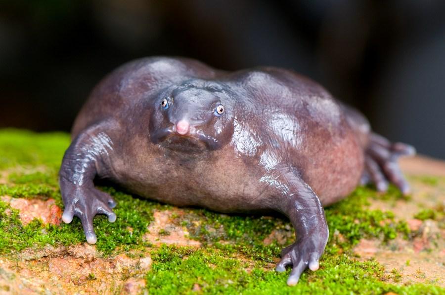 Purple Frog HD Wallpaper by Wallsev.com