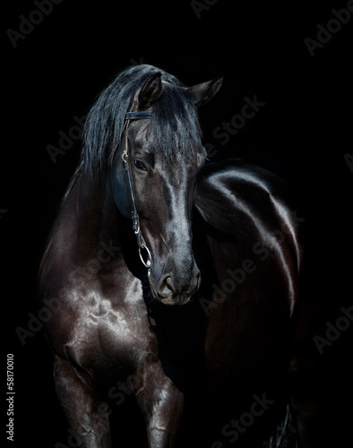 Chestnut Horse Head Isolated On White Background Arabian