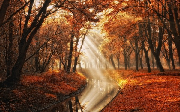 landscape, Nature, Fall, Trees, Canal, Sun Rays, Mist ...
