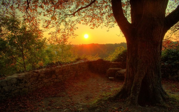 Sun, Trees, Nature, Landscape, Sunset Wallpapers HD ...