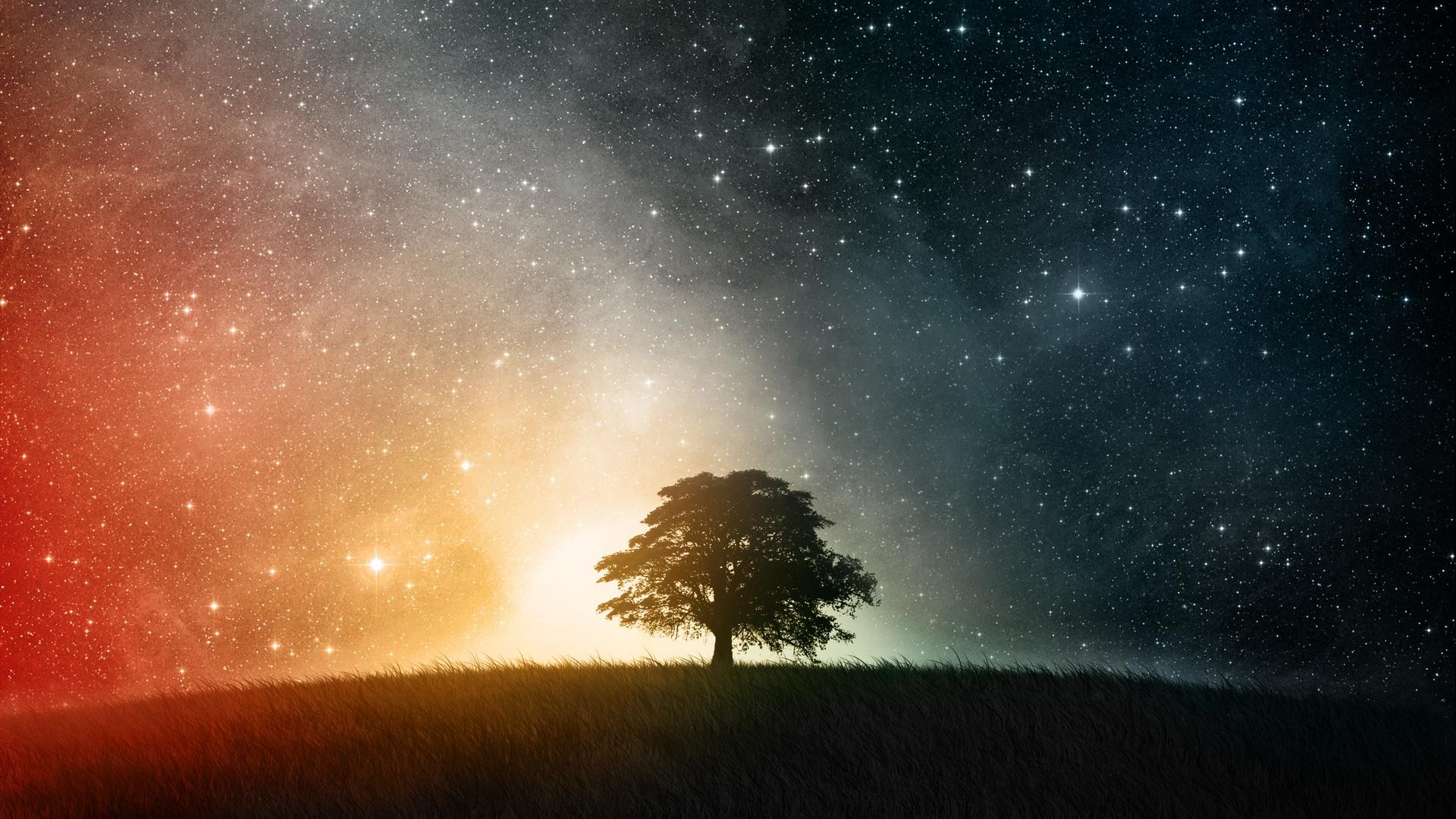 Space Simple Trees Stars Wallpapers Hd Desktop And