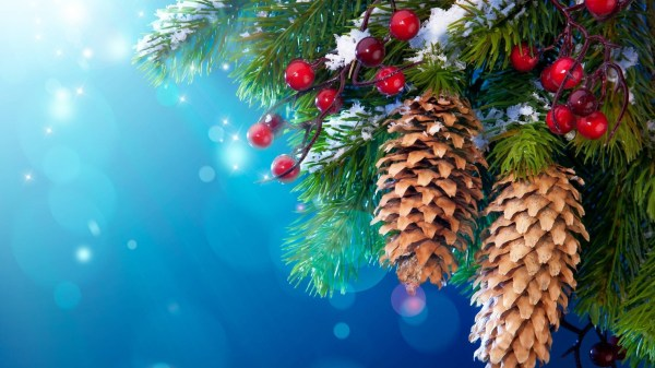 nature, Trees, Cones, Berries, Decorations Wallpapers HD ...