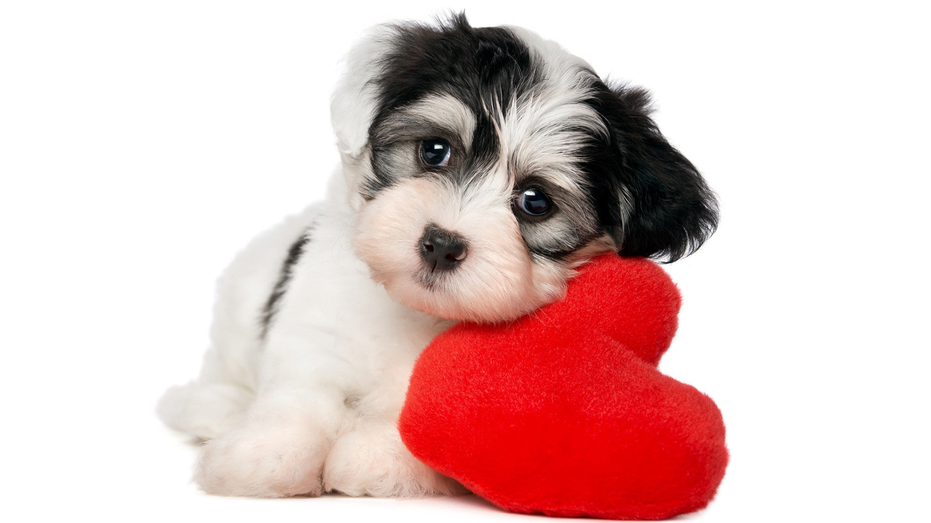 Animals Dog Simple Background Pet Baby Animals Hearts