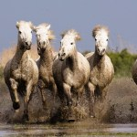 Nature Horse Animals Running Wallpapers Hd Desktop And Mobile Backgrounds