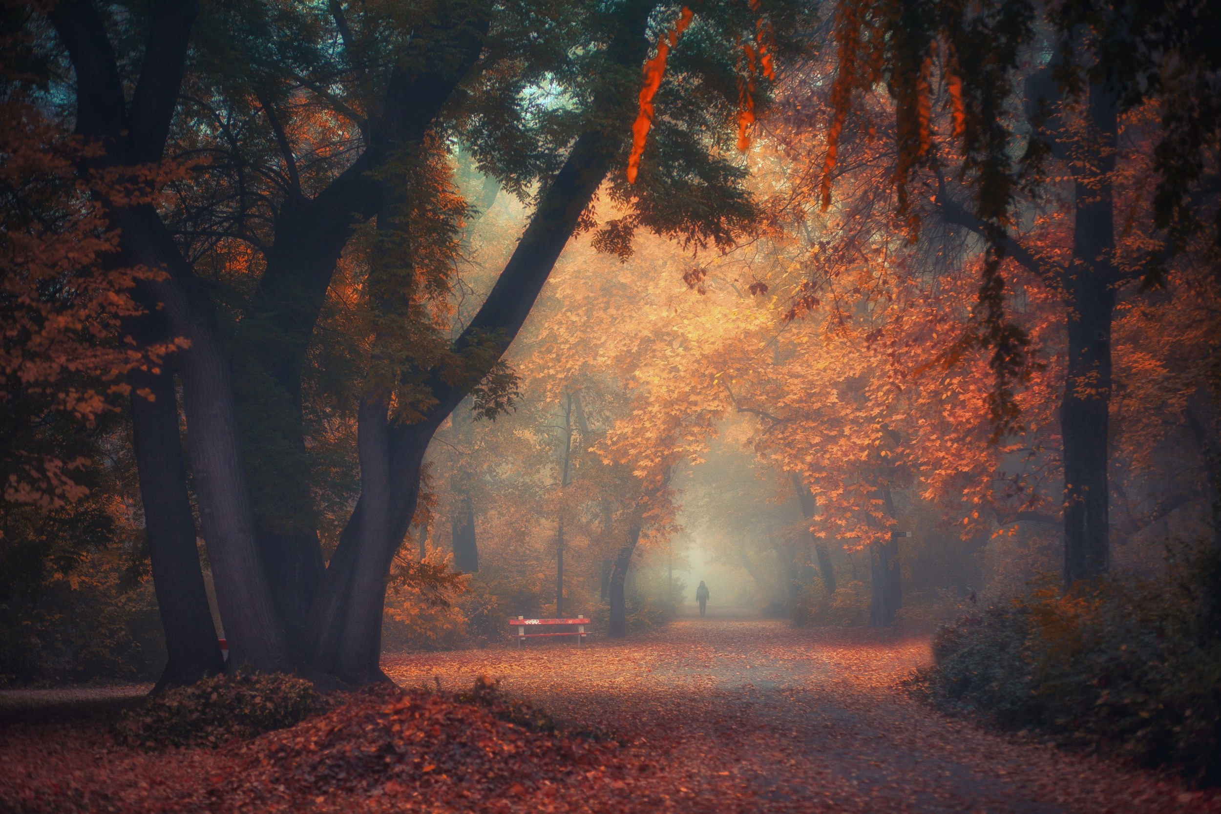 Find the perfect photography nature background hd stock photo. walking, Nature, Photography, Landscape, Park, Morning ...