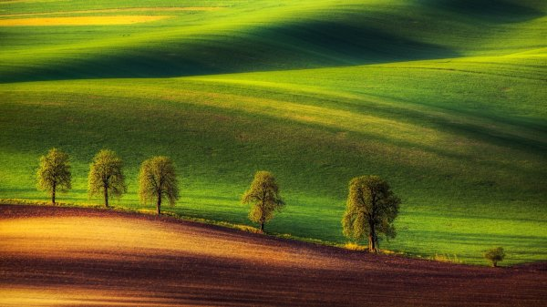 green, Hills, Trees, Ground Wallpapers HD / Desktop and ...