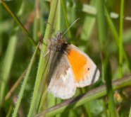 004 Small Heath_edited-2