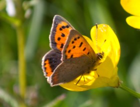 034 Small Copper_edited-2