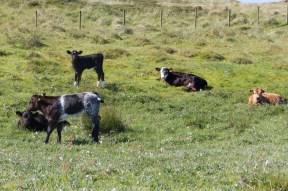 010 Calves Creche_edited-2