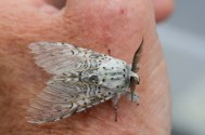 038 Puss Moth 11th June 2014_edited-2