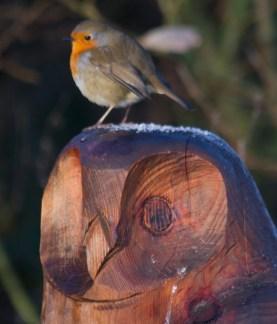 015 Robin on Owl_edited-2