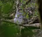 015 Sparrow Hawk at Gillies_edited-2