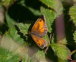 041 Gatekeeper_edited-2