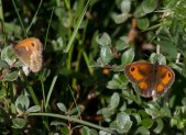 048 Two Gatekeepers_edited-2