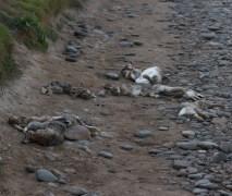012 Ten dead rabbits_edited-2