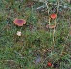 013 Fungi_edited-2