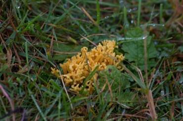 015 Fungus_edited-2