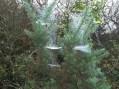 P1010721 Mist on spiders web_edited-3