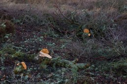 IMG_3625 Tree felling on reserve Feb 2017 - Copy
