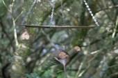 IMG_5022 Rat jumping off bird table - Copy
