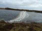 P1020259 Ice path on pond - Copy