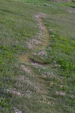 IMG_6374 Path edged with Thrift - Copy