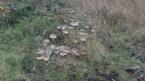 IMG_20181027_083515732 Colony of Fungi - Copy