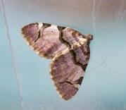 IMG_8437 Moth hunt N End 19-20th April 2019 Streamer - Copy