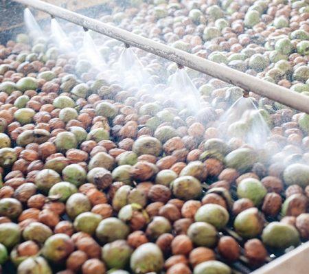 walnuts in wash