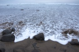 Sea foam and the rising tide