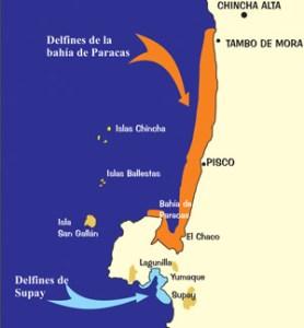 Karte Delfine vor der Paracas-Halbinsel. Von ACOREMA