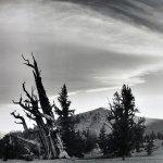 Landscape 8 by walter huber
