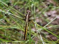 Photo 4. Female.