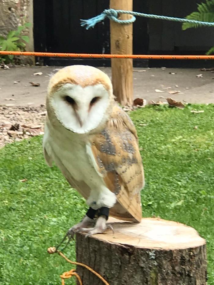 owl-harry-potter