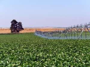 Walther Farms Nebraska Potato Field