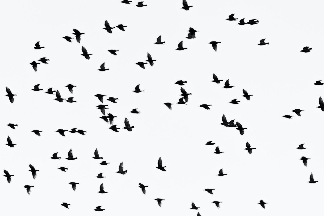 Alleen de vogels vliegen van Oost- naar West-Berlijn