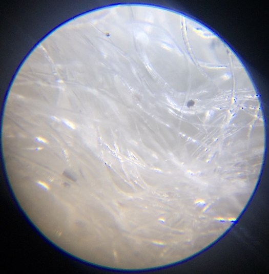White wool seen through a microscope. There are pieces of peat in the wool.