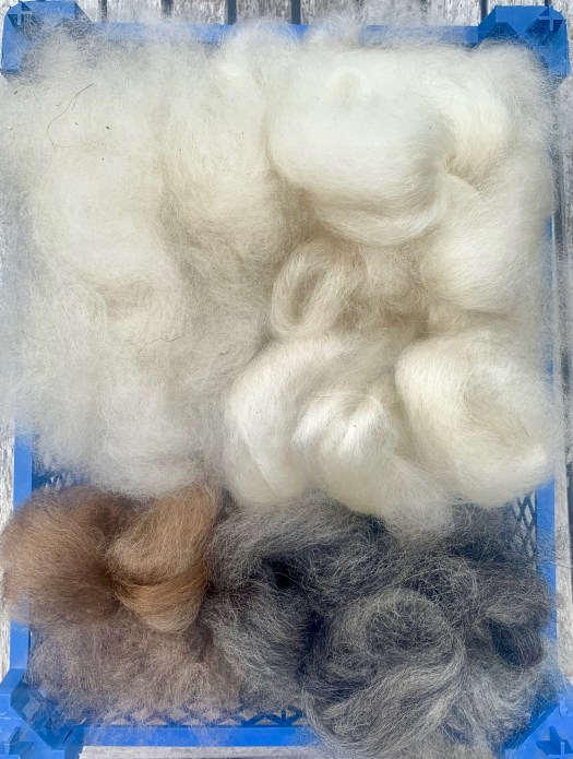A palette of Värmland wool. Combed outer coat tops in white, brown and grey plus the undercoat comb leftovers.