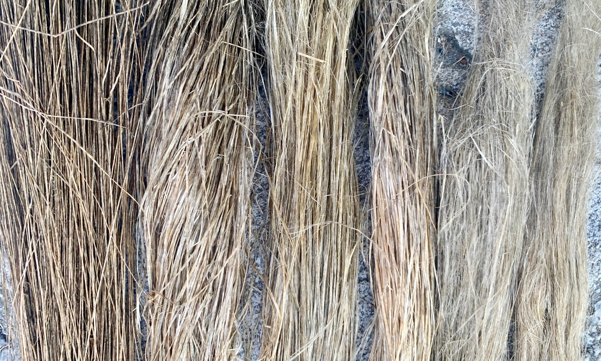 Six stages of processed flax. The fibers get increasingly finer and cleaner.