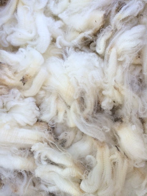 A pile of fine fibered white wool with high crimp.