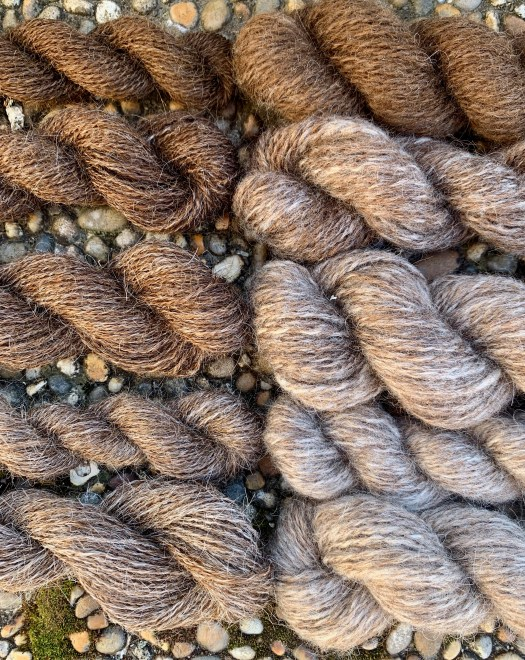 Two yarns in ten shades from one fleece. At first I spun outercoat and undercoat together, but that resulted in string. The wool taught me that I would benefit more from separating the coats.