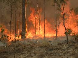 Pictured is a brushfire in Queensland, Australia.