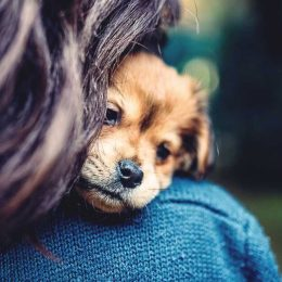 Furry Friends Around Campus: What it's like to have an Emotional Support Animal at Eastern during a stressful season caused by the pandemic.
