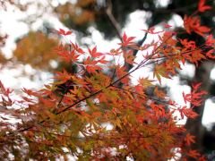 鎌倉の長谷寺のあじさいと紅葉の見頃が気になる!ライトアップは?